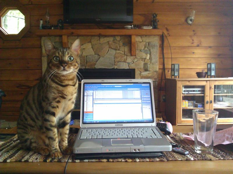 Knitting Work From Home : The knitting pirate � in which presents feline