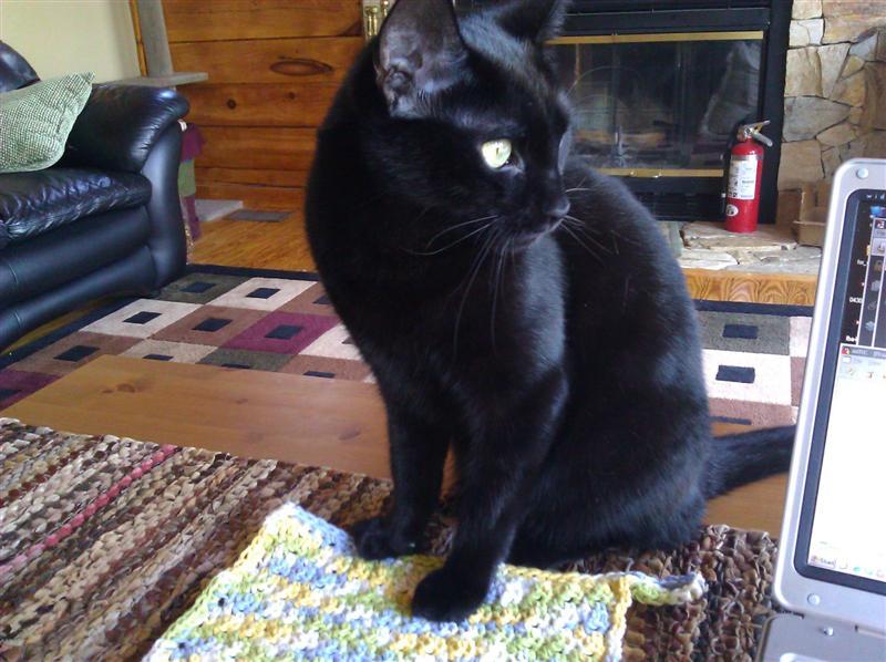 Floyd and the Washcloth
