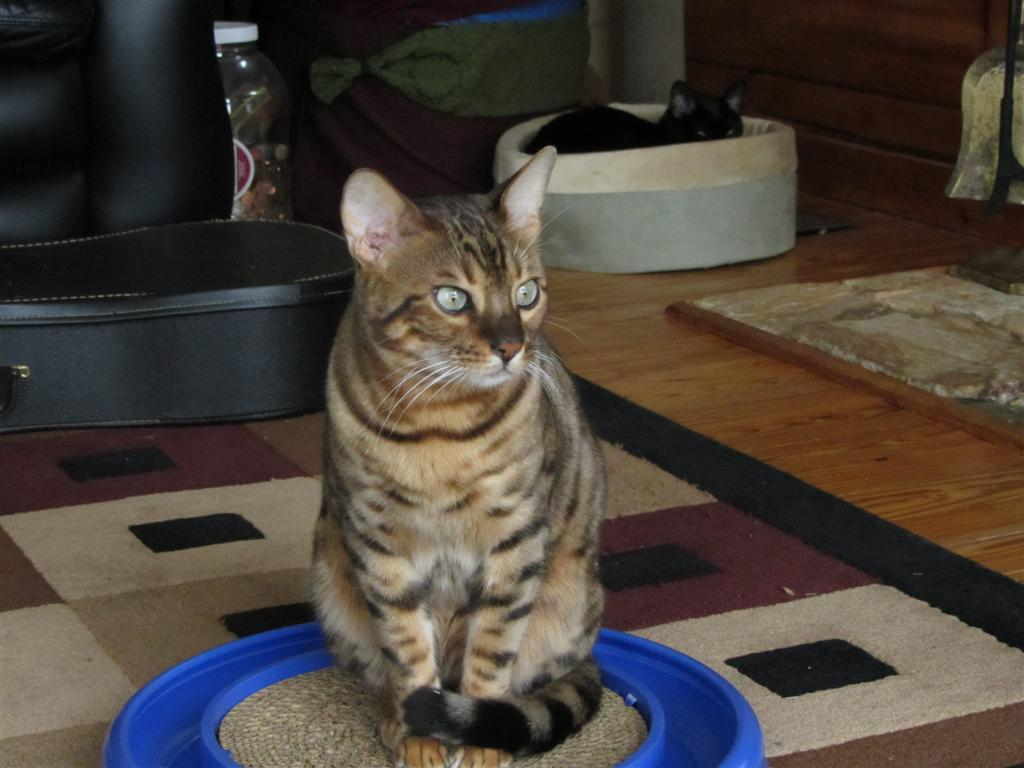 Kipling Guarding Catnip