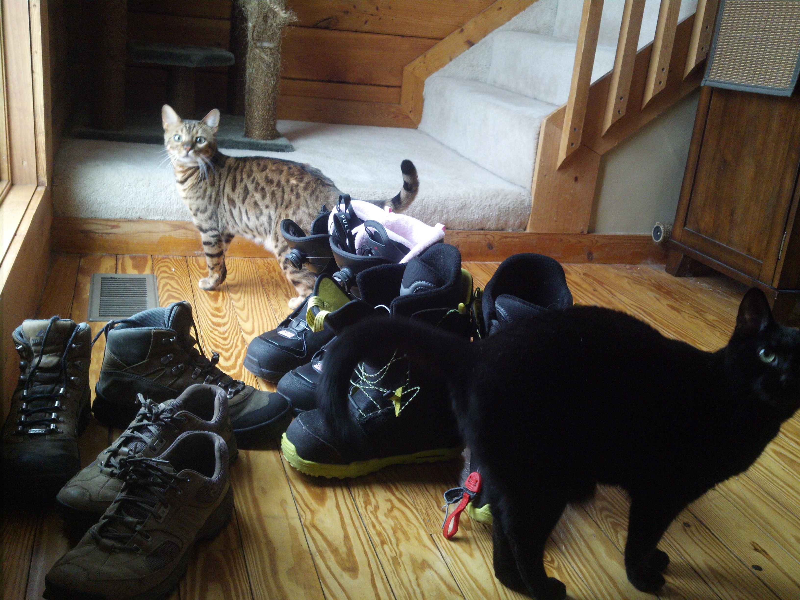 boots-and-cats