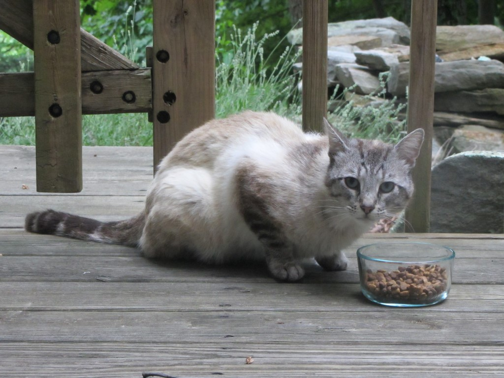 outdoor_siamese3