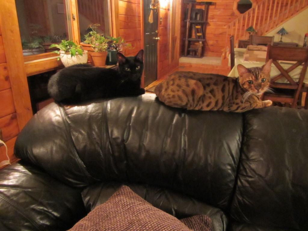 floyd-kipling_couch