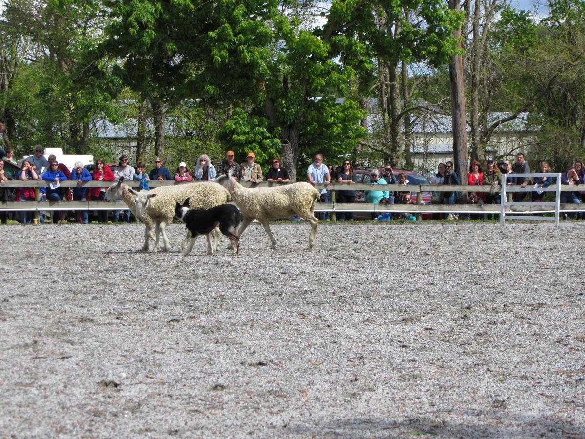 2016MDSW_herding1