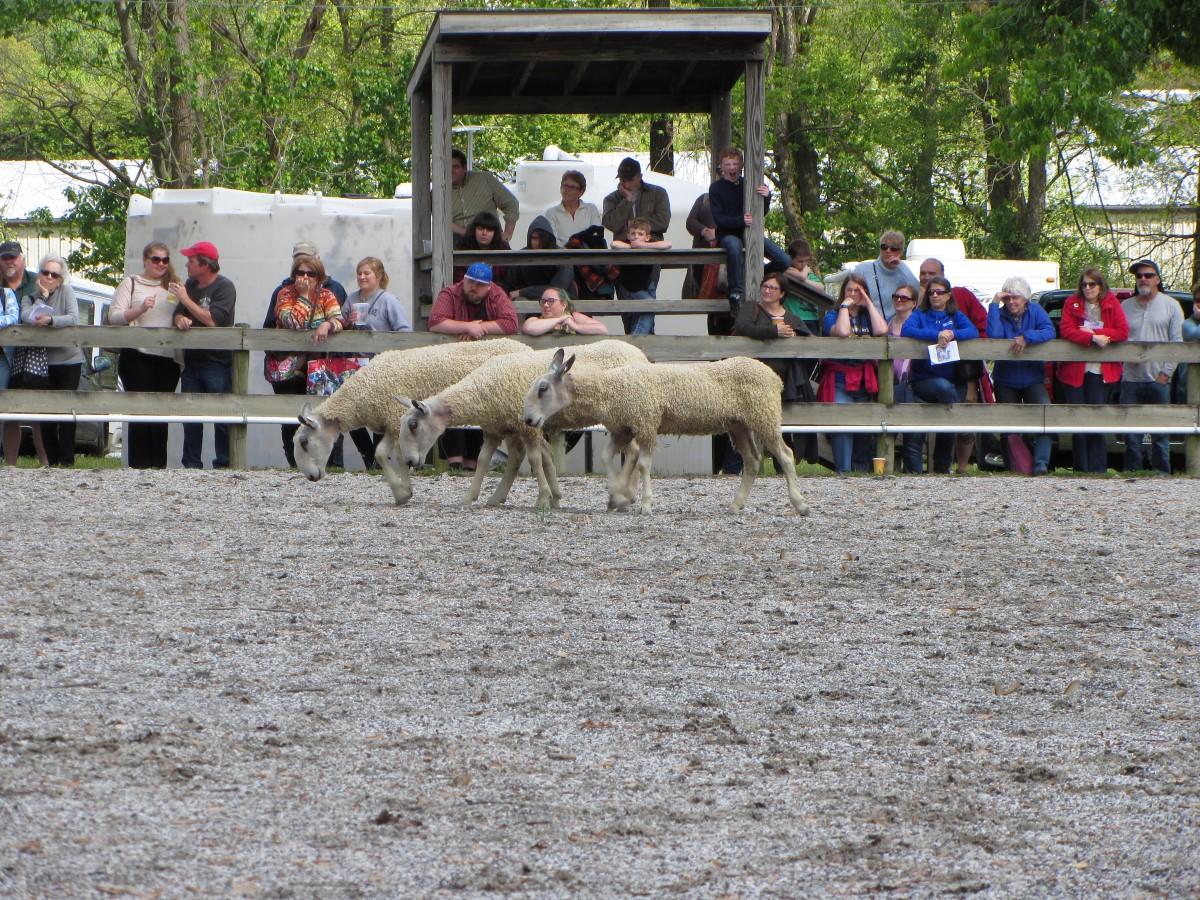 2016MDSW_herding2